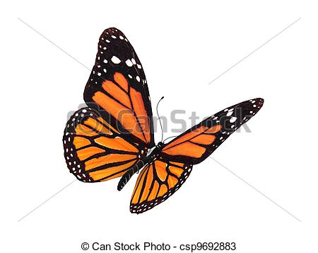 Monarch butterfly Stock Illustration Images. 3,078 Monarch.