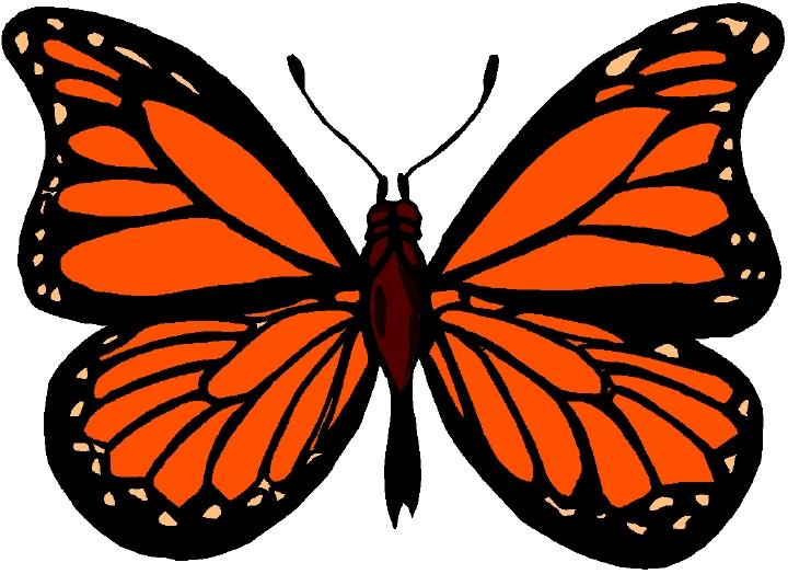 Monarch butterfly clipart monarch clip art.