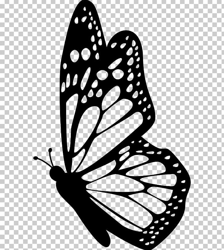 Monarch Butterfly Insect PNG, Clipart, Animal, Artwork.