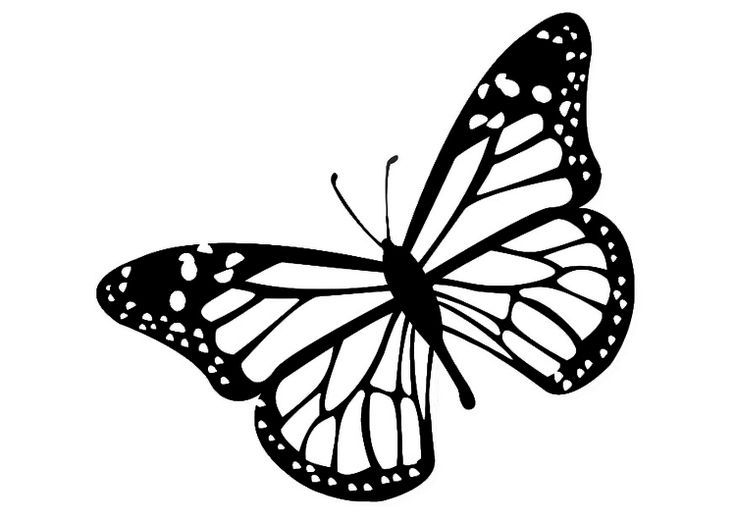 Image result for butterfly clipart black and white.