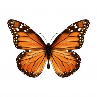 Monarch Butterfly Vectors, Photos and PSD files.