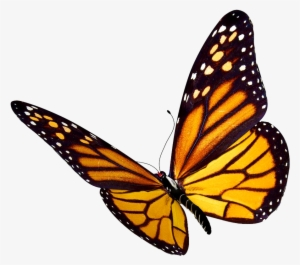 Monarch Butterfly PNG, Transparent Monarch Butterfly PNG.