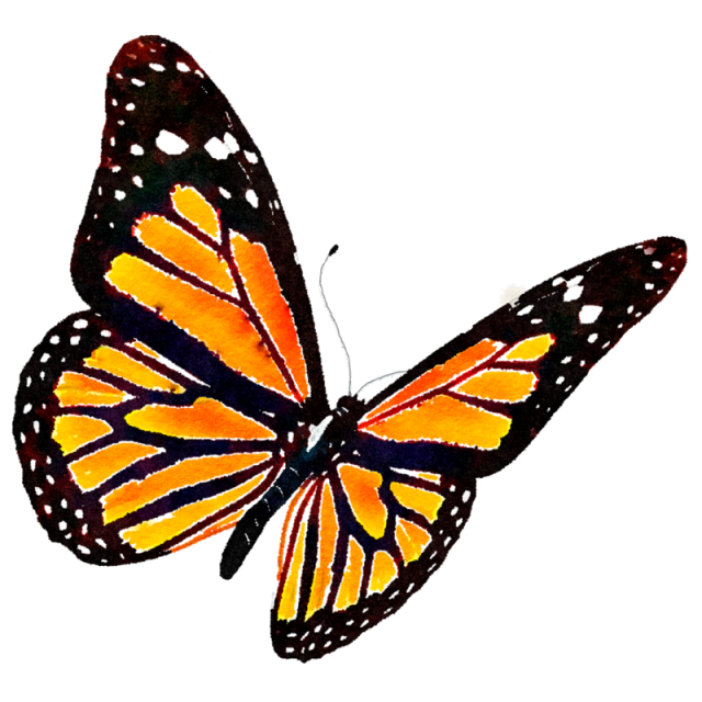 Monarch Butterfly Png & Free Monarch Butterfly.png.