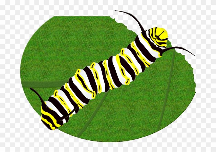 Monarch Butterfly Caterpillar Clipart Brush.