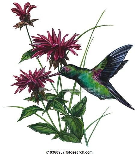 1000+ images about Bee balm on Pinterest.