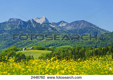 Stock Photography of Wild flowers blooming in field, Schafberg.