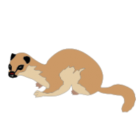 MONGOOSE CLIPART Archives.