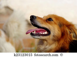Mongrel Images and Stock Photos. 6,998 mongrel photography and.