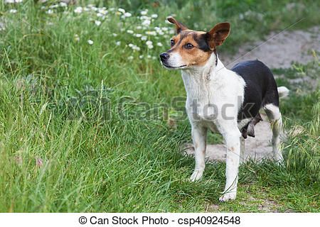 Stock Photo of Mongrel dog outdoors.