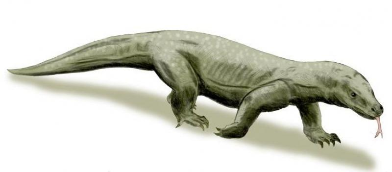 10 Cool Giant Versions Of Today's Animals That Went Extinct.