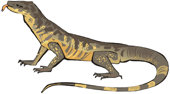 Monitor Lizard Clipart.