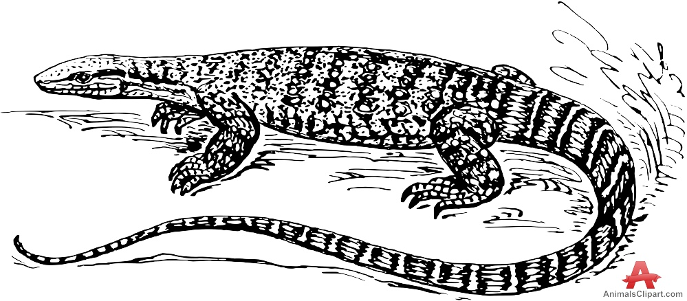 Monitor Lizard Drawing Clipart.