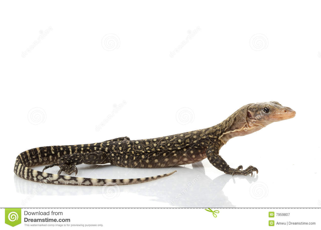 Yellow Monitor Lizard Royalty Free Stock Photography.
