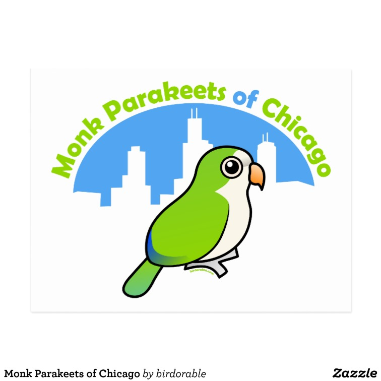 Monk Parakeets of Chicago Postcard.
