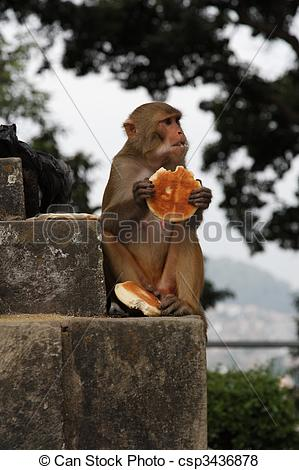 Pictures of Monkey eating bread in Taiwans main capitol Taipei.
