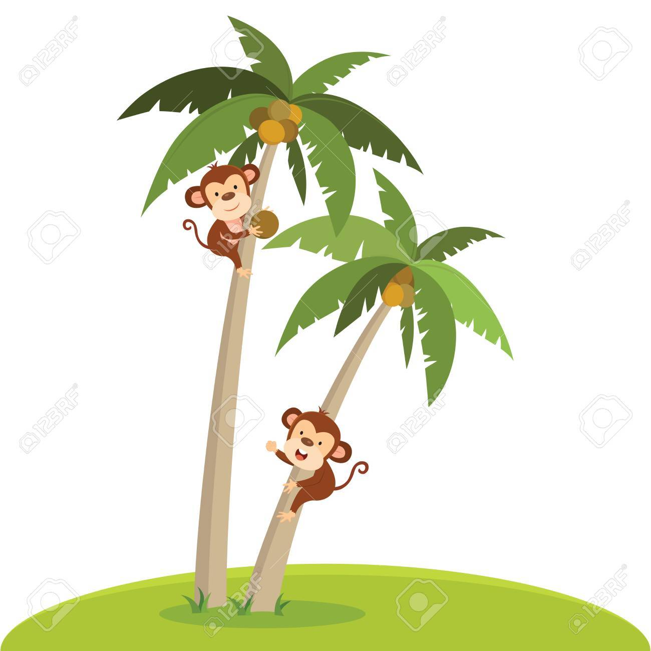 Monkeys climbing coconut tree. A monkey plucking the coconut..