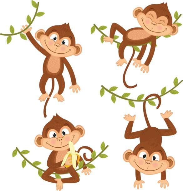 Best Monkey Illustrations, Royalty.