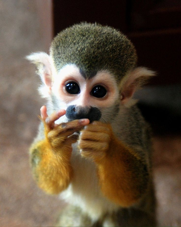 1000+ images about Monkey Business on Pinterest.