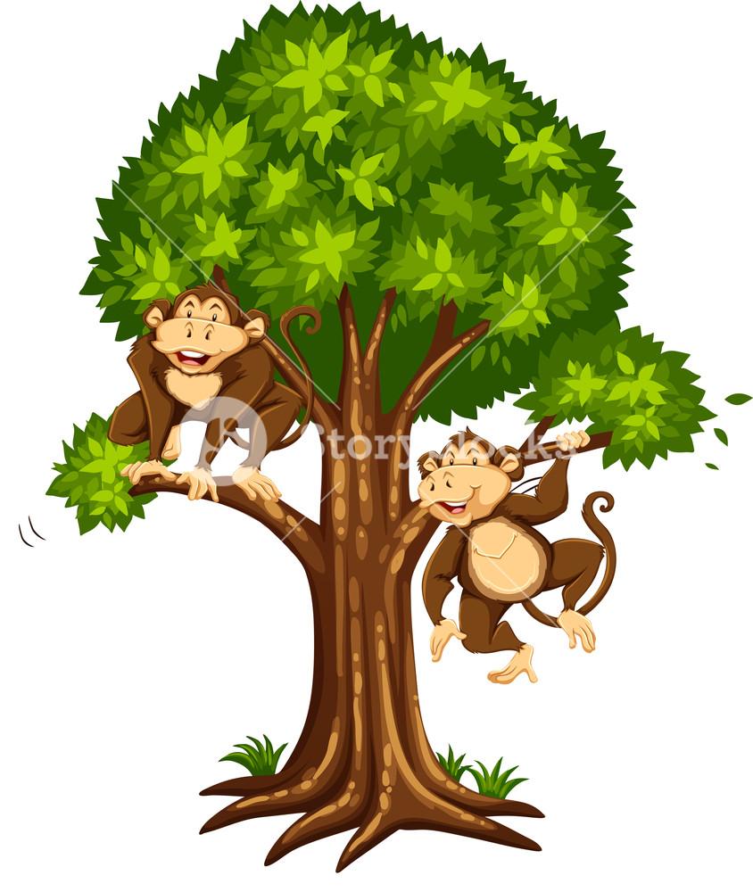 Two monkeys on the tree illustration Royalty.