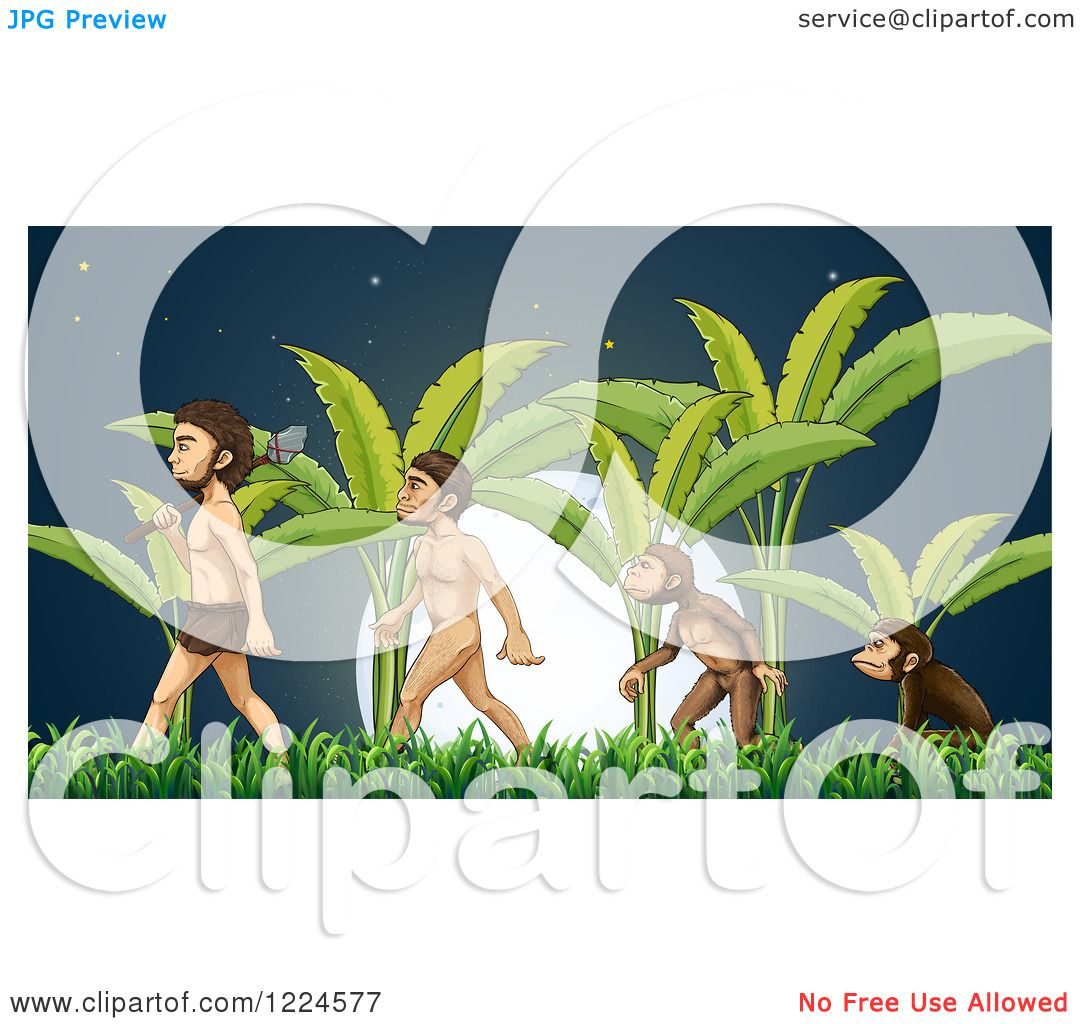 Clipart of Evolution of Monkey to Caveman Walking by Palm Trees at.
