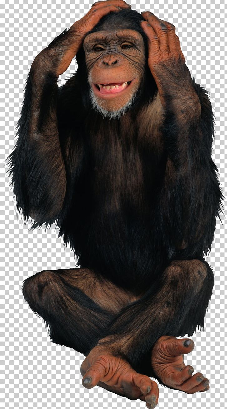Monkey PNG, Clipart, Monkey Free PNG Download.
