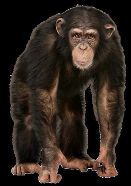 Monkey (PNG).