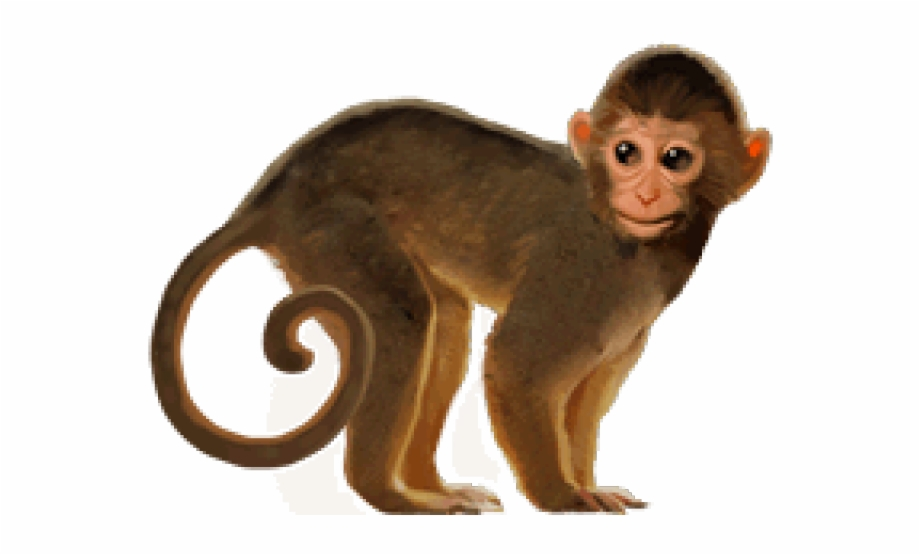 Png Image Of Monkey Free PNG Images & Clipart Download.