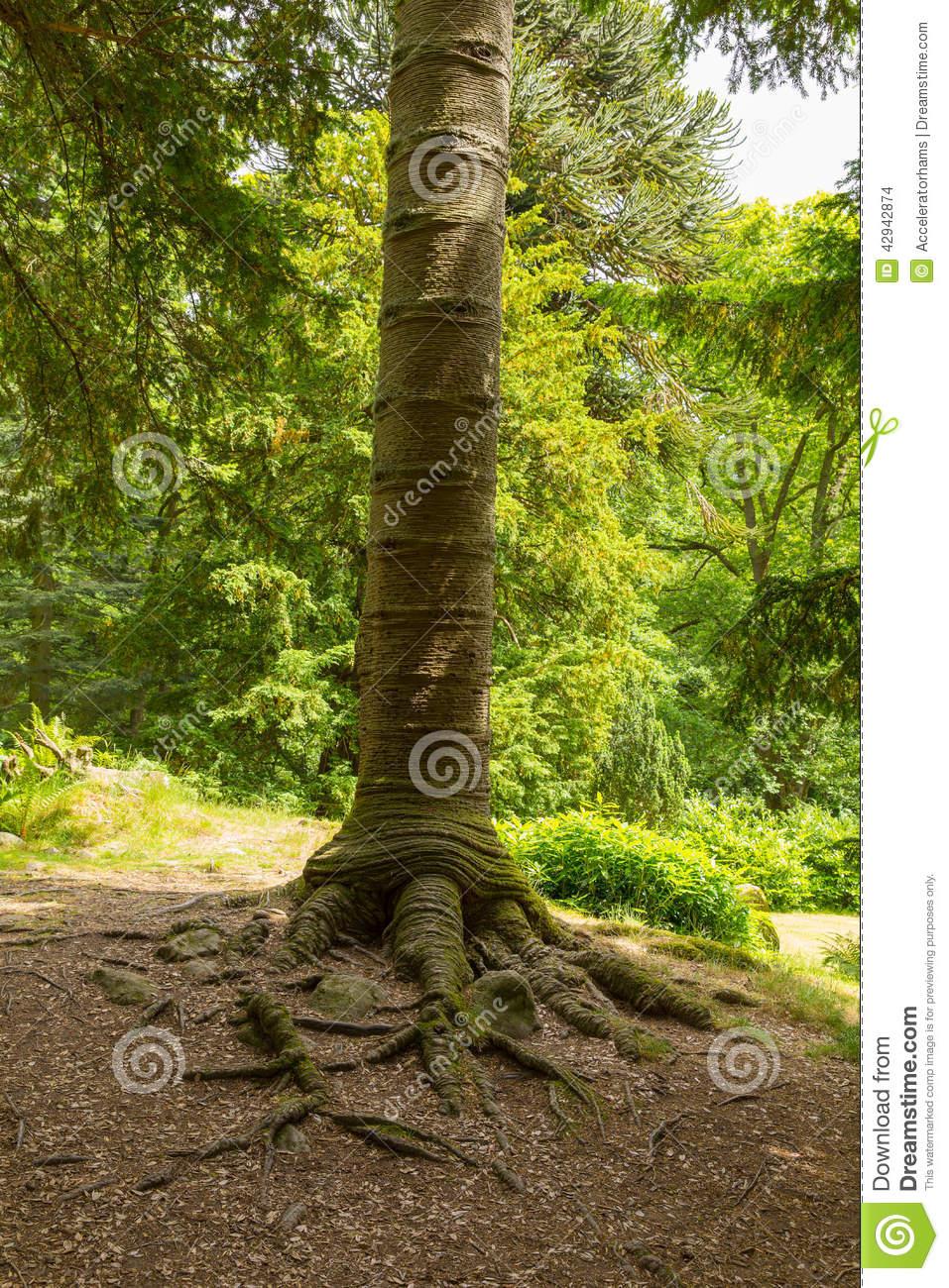 Monkey walking on a trunk tree clipart.
