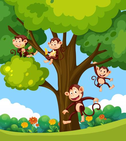 Monkey playing at the tree.