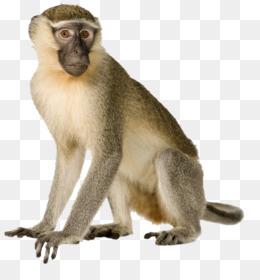 Cartoon Monkey PNG.