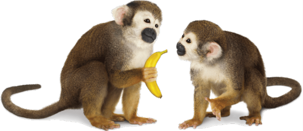 Monkey PNG images free download.
