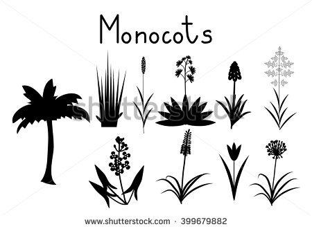 Monocotyledonous Tree Stock Photos, Royalty.