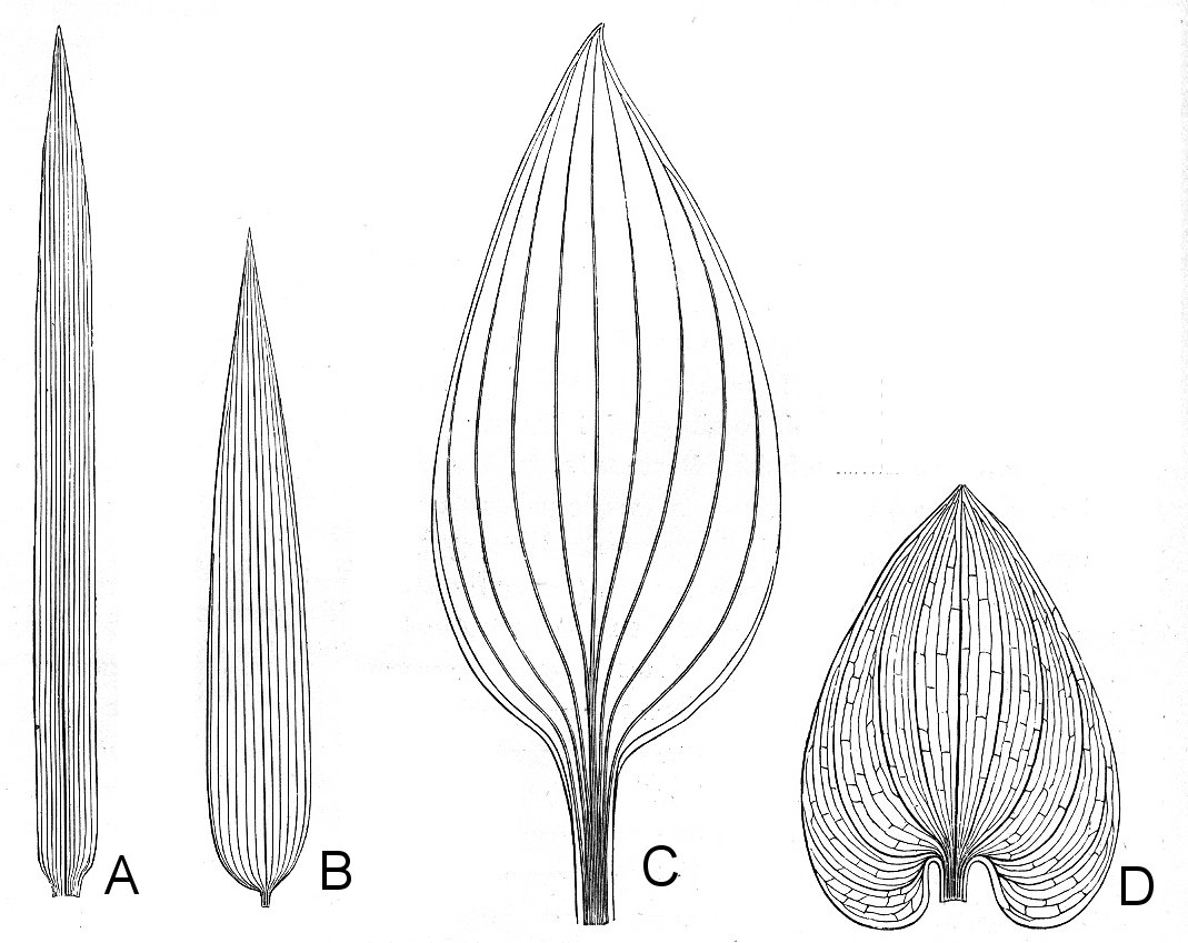1000+ images about Plant Morphology on Pinterest.