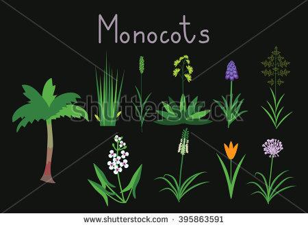 Monocot Stock Photos, Royalty.