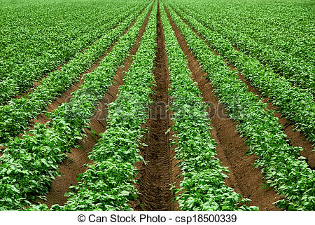 Stock Photos of Rows of vibrant green crop plants.