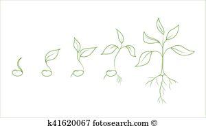 Monocotyledon Clip Art Illustrations. 5 monocotyledon clipart EPS.