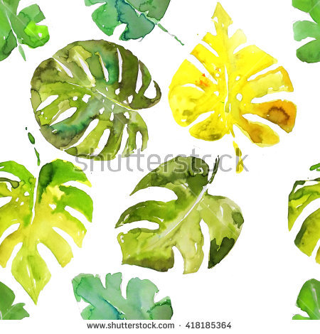 Monstera Deliciosa Stock Photos, Royalty.