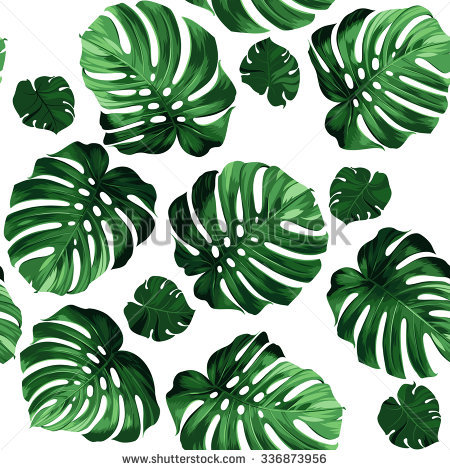 Monstera Stock Photos, Royalty.
