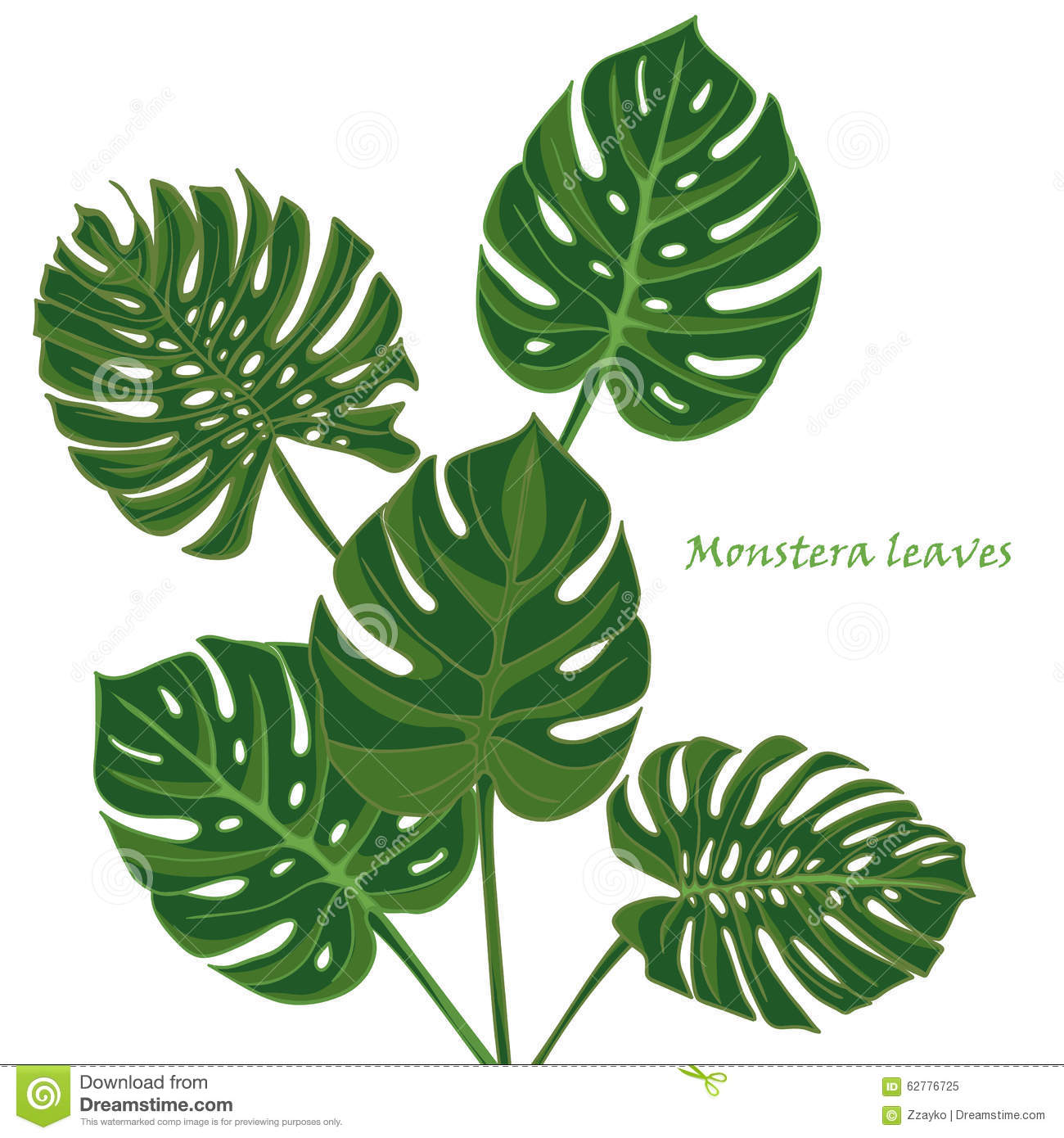 Monstera leaf clipart.