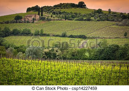 Stock Images of Vineyard near Montalcino, Tuscany, Italy.