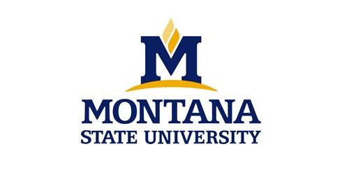 Montana State University Wallpaper.