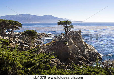 Stock Images of Iconic Lone Cypress Tree, Monterey Bay, California.