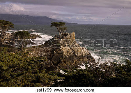 Stock Photograph of Lone Cypress along the 17 mile drive, Monterey.