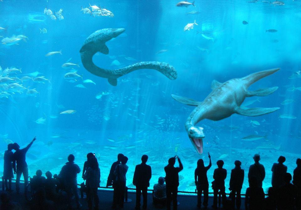 New Monterey Bay Aquarium exhibit.