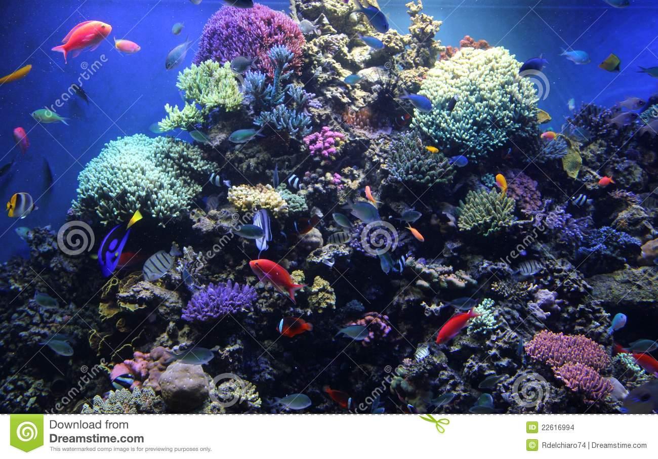 Monterey bay aquarium clipart.
