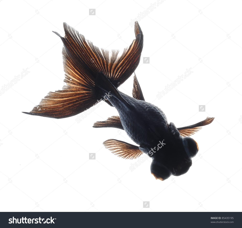 Black Moor Goldfish Isolated On White Stock Photo 85435195.
