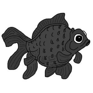 Black Moor Goldfish.
