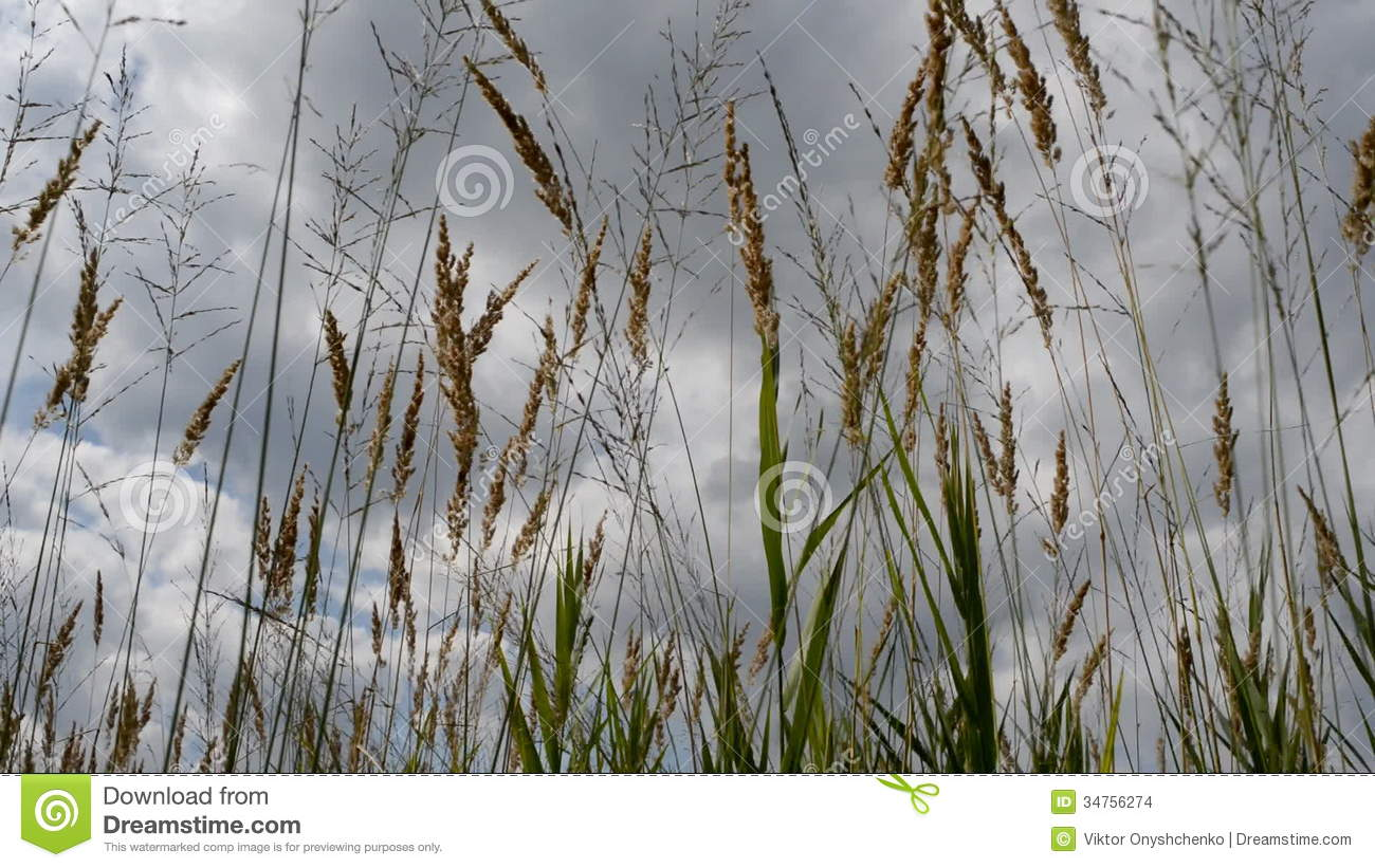 Fen Grasses Stock Video Footage.