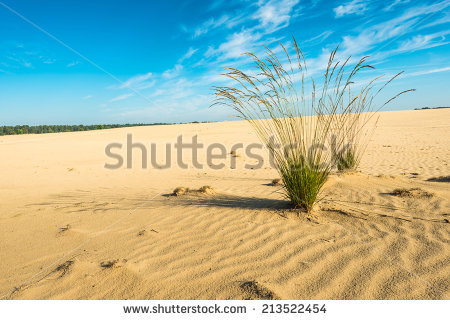 Purple Moor Grass Stock Images, Royalty.