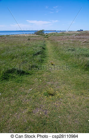Pictures of Heath seaside beach landscape with path in moor grass.